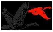 sulwath-birds2