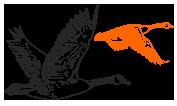 sulwath-birds3